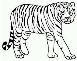 Small Picture Special Coloring Pages Of Tigers For KIDS Book 6923 Unknown