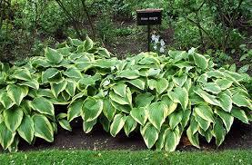 deer repellent for gardens. Garden Design With Deer Repellent Gifts From Mosquitosquadaloana.wordpress.com For Gardens