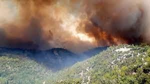 İstanbul Üniversitesi'nden orman yangınları raporu: 'Kasıt' ve 'sabotaj'  ihtimaline dikkat çekildi