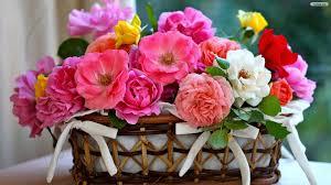 beautiful flower bucket colorful flower bouquet wallpapers