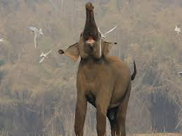 Image result for chased by an elephant images