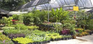 low maintenance perennials for