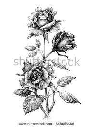 Small Picture Rose Sketch Stock Images Royalty Free Images Vectors Shutterstock