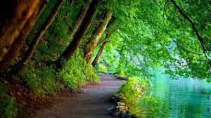 Nature Green Hintergrundbilder ...