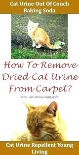 how remove cat urine smell to get out of couch removing stain leather from carpet on