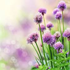 flower images free stock photos 10 850 free stock photos for mercial use format hd high resolution jpg images