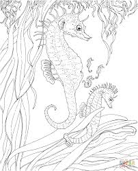Small Picture Seahorse coloring page Free Printable Coloring Pages