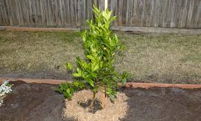 How To Prune Fruit Trees In South Africa  Plantinfo  EVERYTHING Planting A Fruit Tree