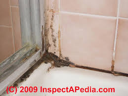how to kill bathroom mold. Bathroom Ceiling Mold Removal Kill Black Mould How To Clean .
