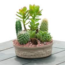 indoor cactus plants givingcom species houseplants large uk house for