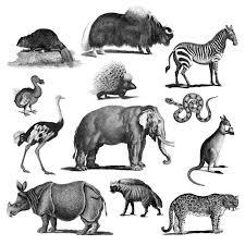 Vintage Illustrations Vintage Illustrations Of Animals Vector Free Download