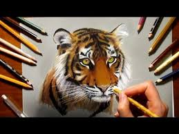 color tiger drawing. Perfect Tiger Colored Pencil Drawing Tiger  Speed Draw  Jasmina Susak Throughout Color Drawing YouTube