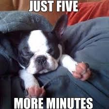 "Aww on Twitter: ""Sleepy Sundays 😴 #five #more #minutes #puppy ... via Relatably.com"