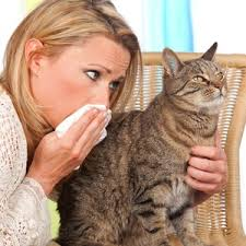 Allergies? You can keep your cat   Health24