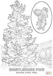 Small Picture Nevada State Tree coloring page Free Printable Coloring Pages