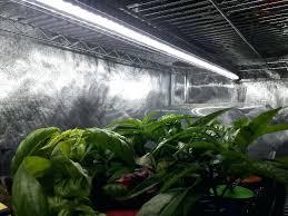 indoor herb garden with light diy 5 tips led grow lights