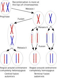 Parthenogenesis Wikipedia