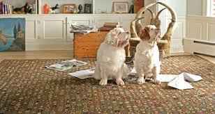 cat puzzle rug republicofmike com