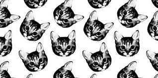 cats twitter background. Simple Cats Cats Twitter Header Inside Twitter Background C