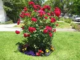ideas for a small circular flower bed design for a small garden