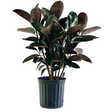 indoor plants plant pots uk for in sri lanka large