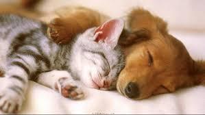 cute kittens and puppies wallpaper. Plain Kittens Cute Kitten And Puppy Wallpaper To Cute Kittens And Puppies Wallpaper 6