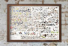All Of North Americas 740 Bird Species On One Glorious