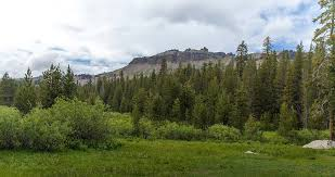 Wildenauer fußböden gmbh schlagfeld 6 in bödenwohr altenschwand, ☎ telefon 09434 763 mit bilder, anfahrtsplan und kategorien. Tahoe National Forest Wikipedia