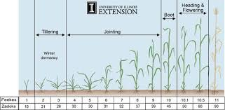 Winter Wheat Growth Stages Chart Adaptive Wheat Management Increasing Wheat Yield By