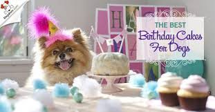 The Best Birthday Cakes For Dogs Personalised Presents Gifts
