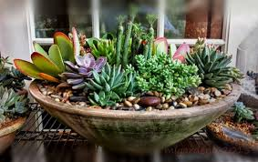 Small Picture Garden Design Ideas Sucessful Succulent Gardening