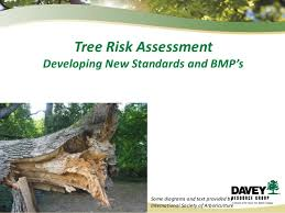 Tree Risk Assessment_mo Appa