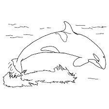 Small Picture Picture of Blue Whale Colouring Page Colouring Tube
