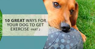 this is part two of our series on exercising your dog last time we talked about running cing flyball