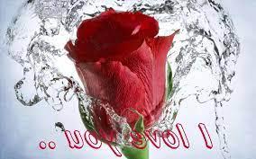 flower: rose flower love image download