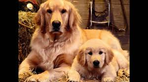 most beautiful dogs wallpapers. Brilliant Wallpapers Real Dogs Photos And Cute Dog Latest Images HD Wallpapers Download  YouTube Throughout Most Beautiful