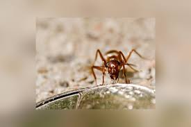What Kind Of Ants Are In My House Mnn Mother Nature Network