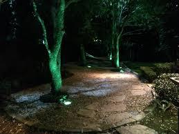 tree lighting installed by dallas landscape lighting