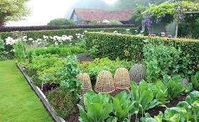 kitchen garden kitchen garden kitchen garden kitchen garden seeds in hyderabad kitchen garden