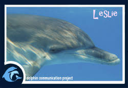 adopt a dolphin leslie