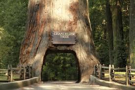 chandelier tree silverlake ca you