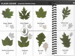 Ohio Leaf Identification Chart Tree Seed Identification Chart Survival And Self Reliance