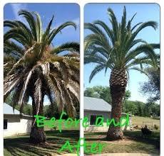 palm tree cutter pruning cutting prices u94