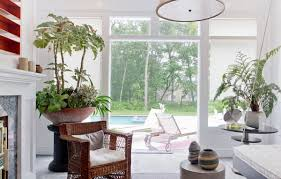 View in gallery Interesting indoor potted plants