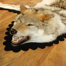big wolf rugs skin area rug taxidermy for mounts beautiful ideas in