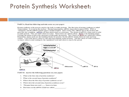 protein synthesis worksheet answers unit 8 molecular genetics and ...