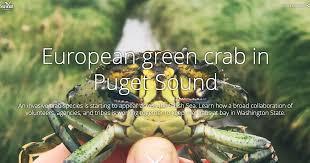 Crab Size Chart Nj European Green Crab Washington Sea Grant