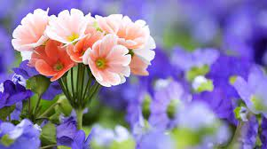 Beautiful flowers wallpapers ...
