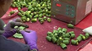 Image result for (betel nuts and betel leaves) in the jail canteen.
