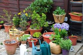 container gardening for beginners. Container Gardening - 35 Of The Best Blogs Ecologist For Beginners I